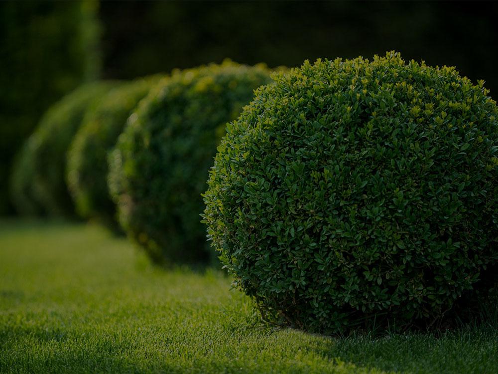 Lansing Landscaping