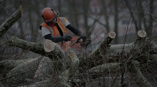 Okemos Tree Service