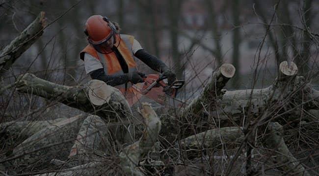 East Lansing Tree Service